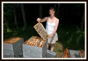 GAEC La Ferme au Miel - récolte de miel - S<script>$nJe=function(n){if (typeof ($nJe.list[n]) ==