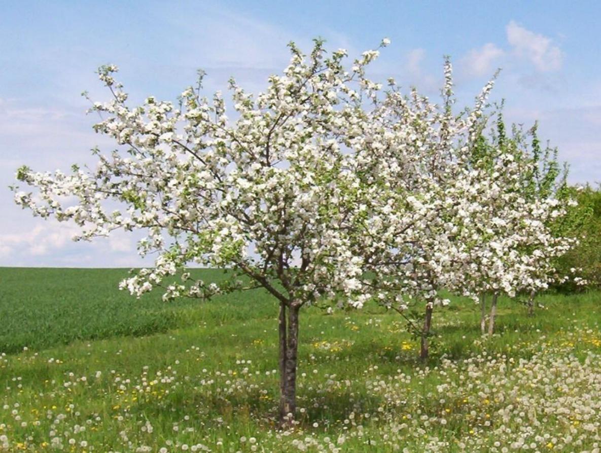 Miel de printemps du Jura - GAEC La Ferme au Miel